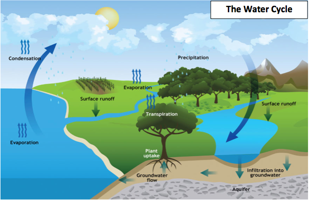 Benefits of Planting a Tree | The Water Cycle | Reusaboo