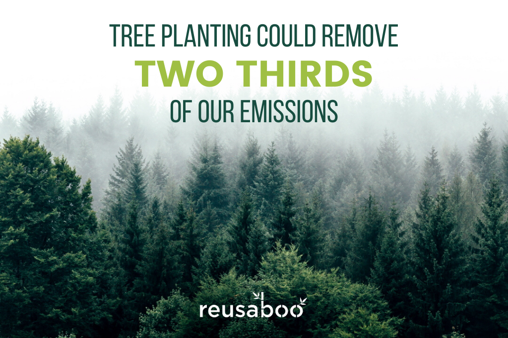 Tree Planting Could Remove Two Thirds Of Our Emissions | Benefits of Planting a Tree | Reusaboo