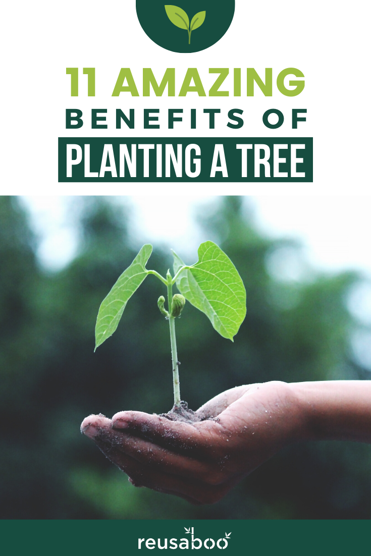 11 Amazing Benefits of Planting A Tree | Reusaboo